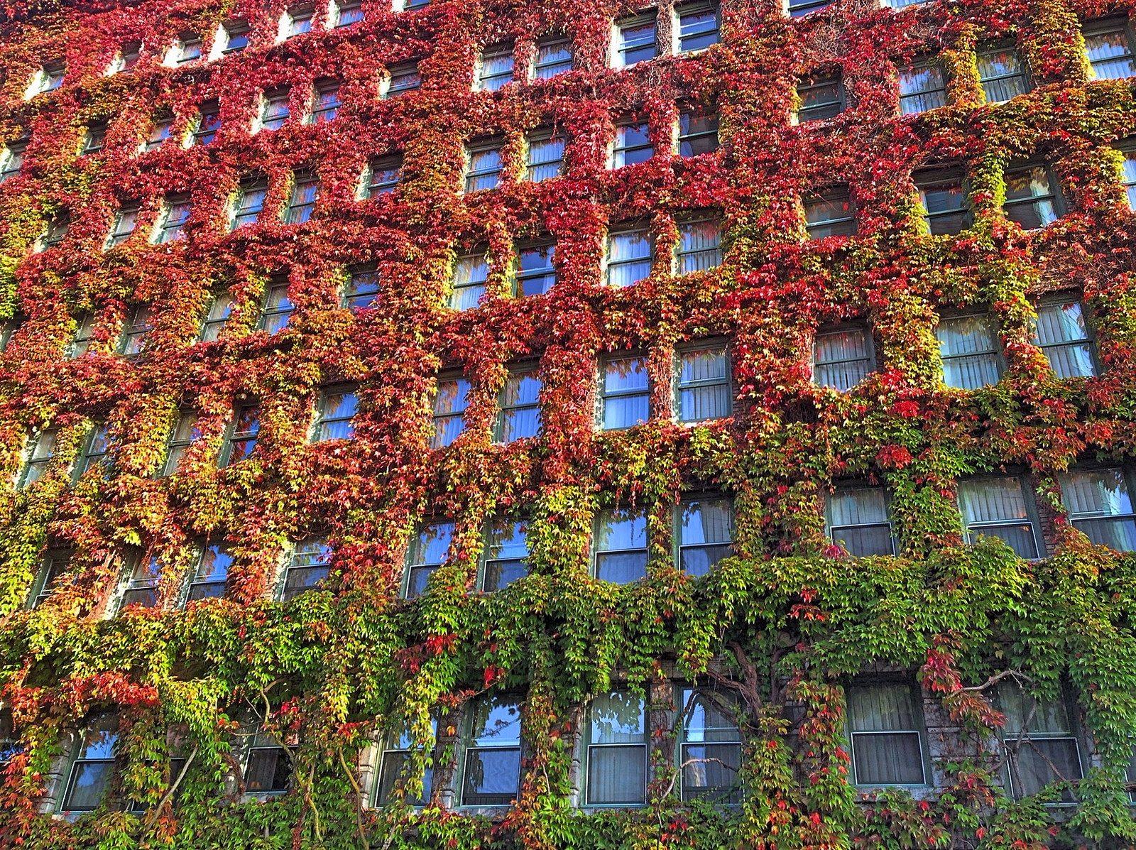 fall vancouver