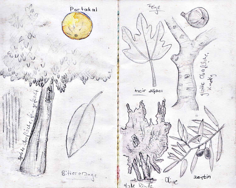 01_Botanist
