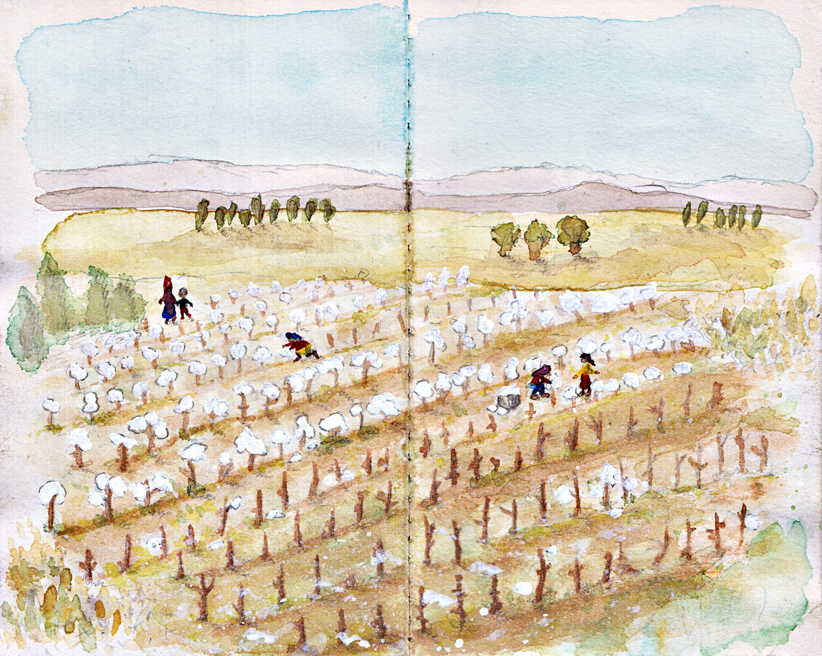08_Cotton Harvest