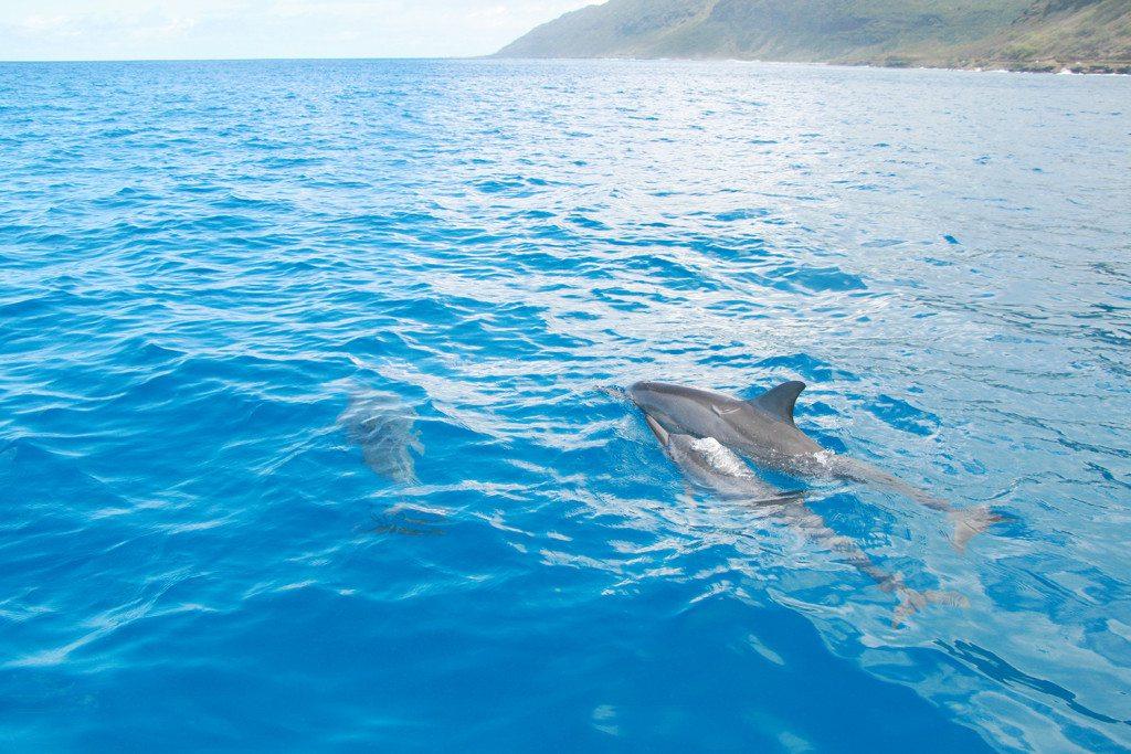 hayo-x-dolphines