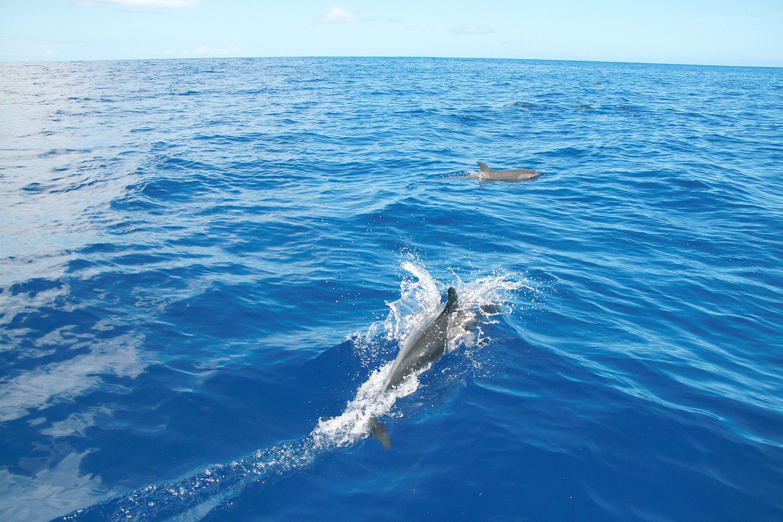hayo-x-dolphines-hawaii5