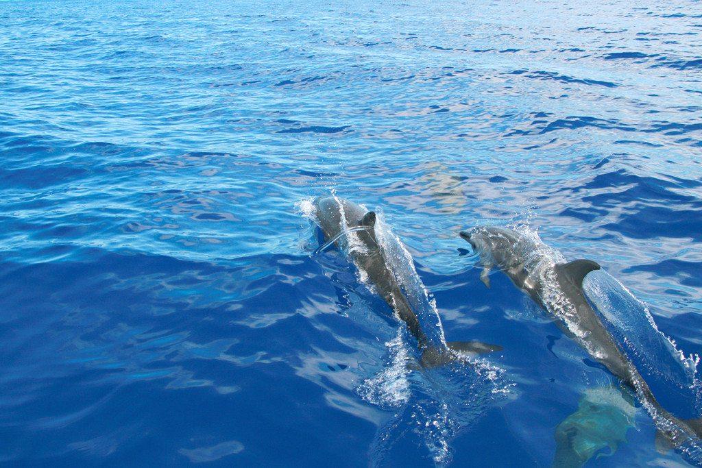 hayo-x-dolphines-hawaii6