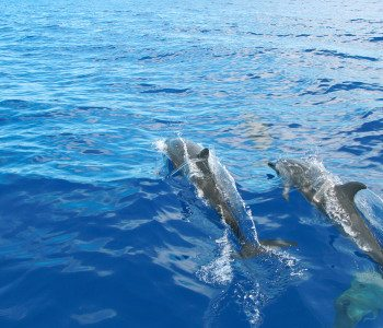 Swimming With Wild Dolphins in Oahu, Hawaii