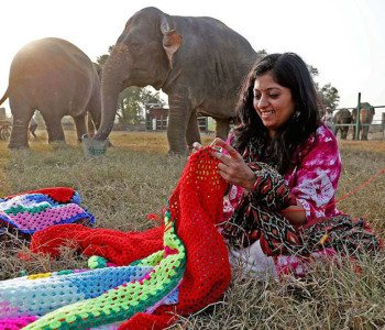 Villagers in India Knit Giant Sweaters to Keep Elephants Warm