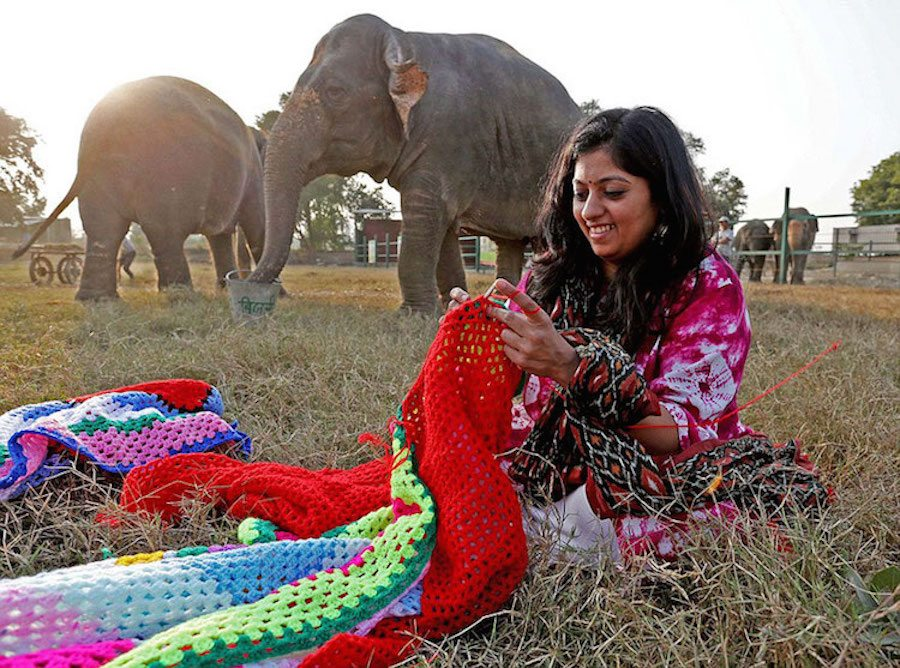 b5a870e044d1 Villagers in India Knit Giant Sweaters to Keep Elephants Warm – Hayo ...